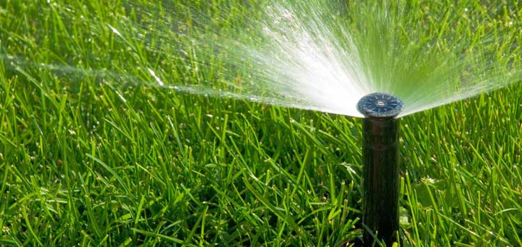 5 Tips on When to Spray Lawn Fertilizer