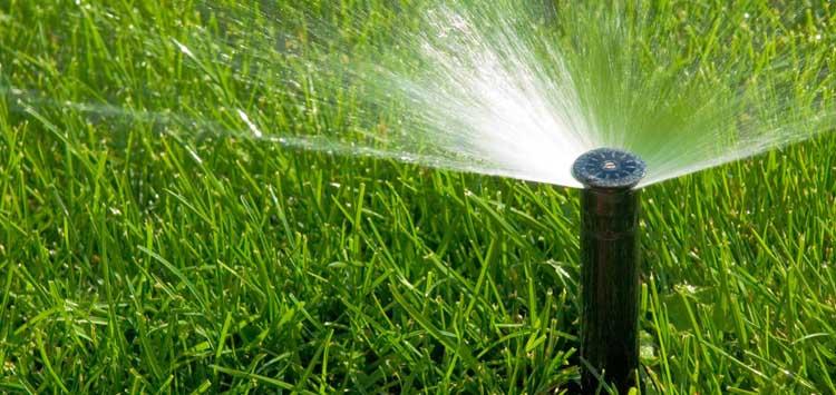5 Tips on When to Spray Lawn Fertilizer