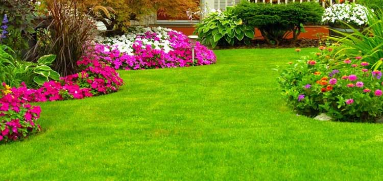 Liquid Lawn Fertilizer vs Granular Which Is Best