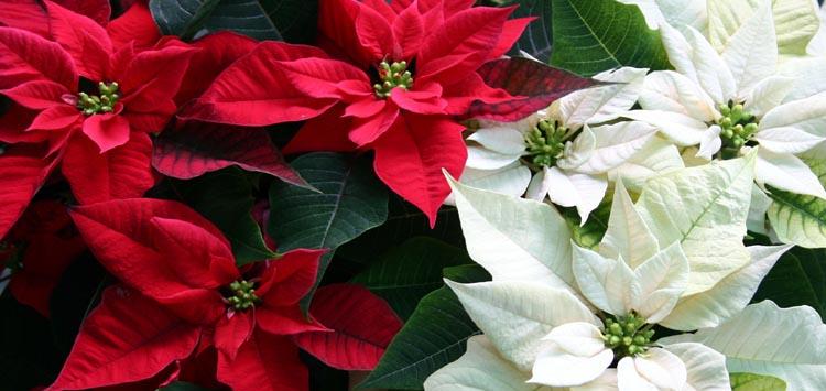 Indoor Winter Plants for Cozy Winter Home