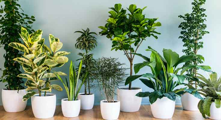 Use Houseplants to enhance your homes smell