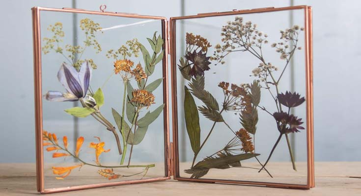 Framed Designs Dried Flowers
