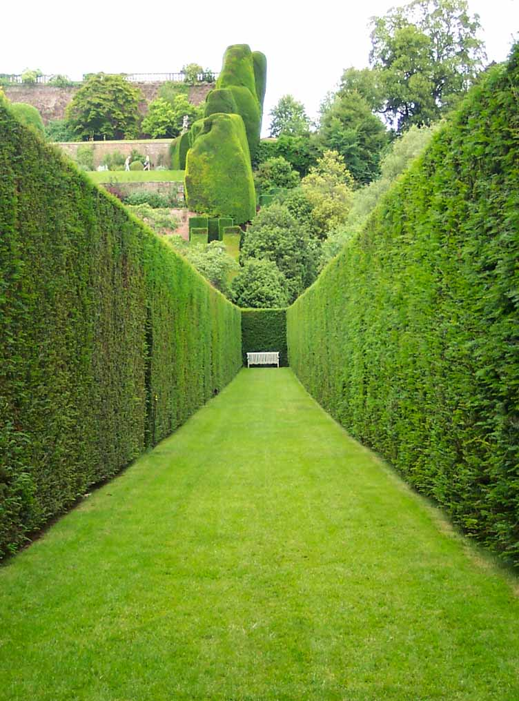 How To Take Care Of Your Garden Hedges Caring For Your Backyard