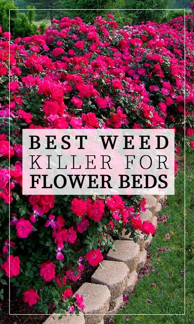 10 Best Weed Killer for Flower Beds Side Bar Banner