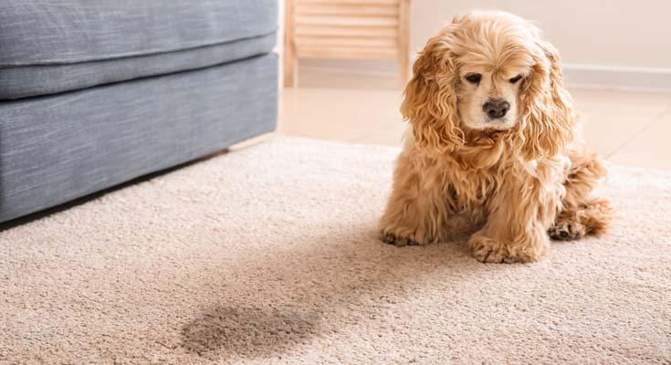 Vinegar & Warm Water DIY Carpet Stain Remover